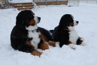 WinterBerners (dpi)
