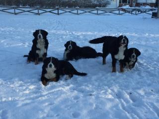 WinterFarrellpups (dpi)