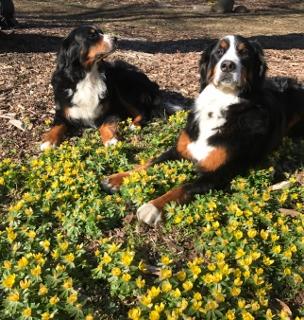 Spring Yep Berners (304x320)