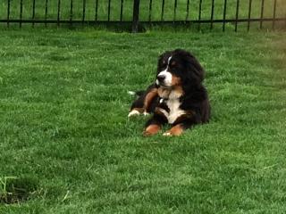 SUMMER Lori Delk Berner Pup (320x240)