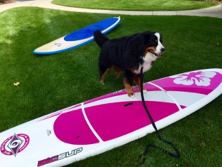 SUMMER Surf Board Berner (320x240)