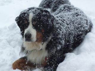 Winter Dougan 2-9-18_4 (320x240)